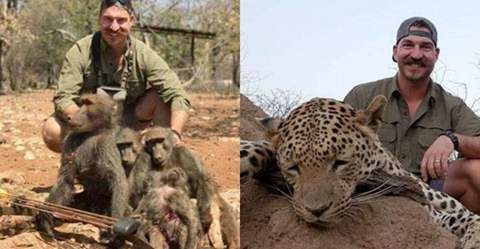 I shot the entire Baboons Family: Trophy Hunting Wildlife Official Faces Pressure To Resign