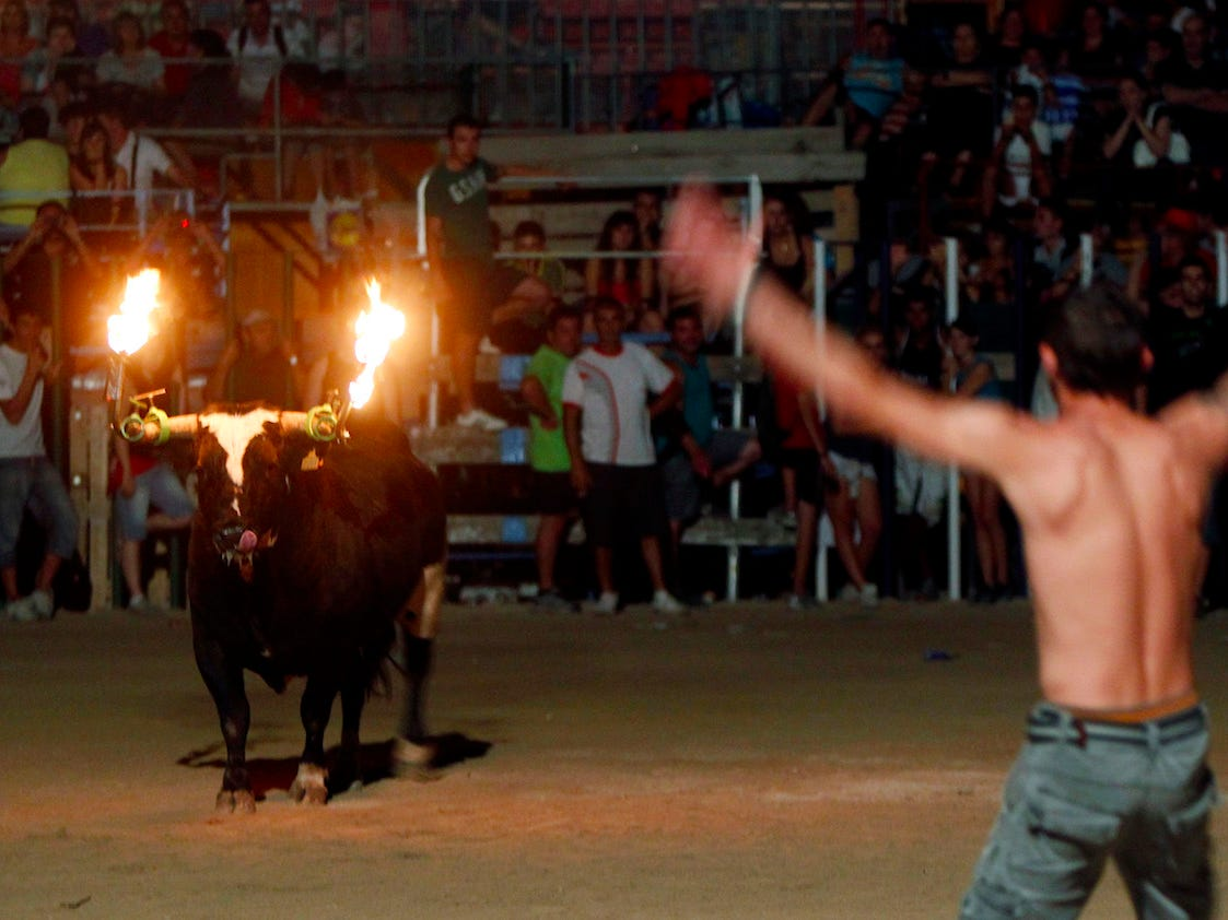 Barbaric footage shows bull kill itself after partygoers set fire to its horns