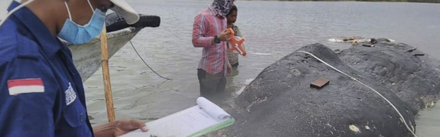 Dead whale had 115 plastic cups, two flip-flops in its stomach