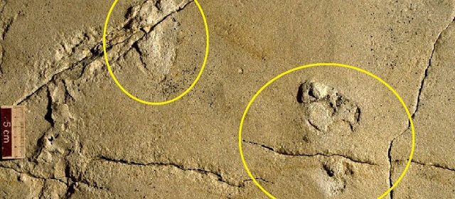 5.7 Million-year-old Human Footprints Fossil May Challenge History of Human Evolution