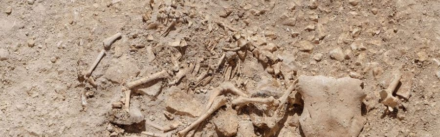 Celts buried animal hybrids beneath their homes as offerings to the gods