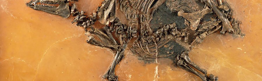 47 million-year-old horse fossil has unborn foal inside