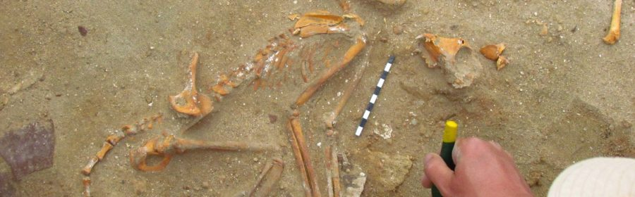 Monkeys from an ancient Egyptian pet cemetery were traced back to India. The compassionate burials in which the monks were placed in the fetal position and were surrounded by grave goods show that the primates were kept as pets in a unique archaeological discovery.