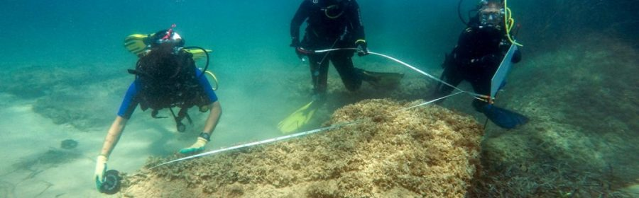 Vast underwater Roman ruins were found at northeastern Tunisia, apparently confirming a theory that the city of Neapolis was partly submerged by a tsunami in the 4th century AD.