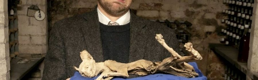 Mummified cat found in wall of late grandmother's home in Transylvania