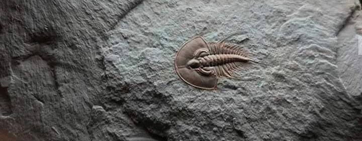 A perfectly preserved 500 million years old Trilobite fossil.
