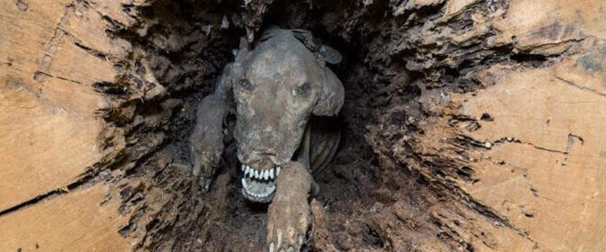 The Dog Who Got Mummified Inside a Tree Trunk