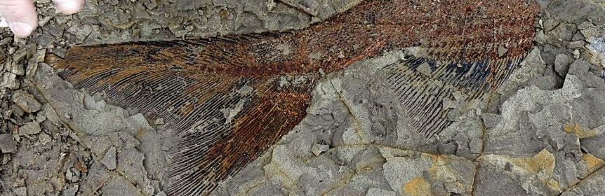 'The day the dinosaurs died': Fossilized snapshot of mass death found on North Dakota ranch