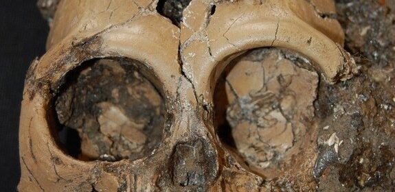 A rare find: Skull of a juvenile ape 6 million years old unearthed