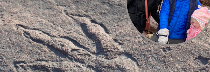 Perfect 215-million-year-old dinosaur print found by girl, 4, on Welsh beach