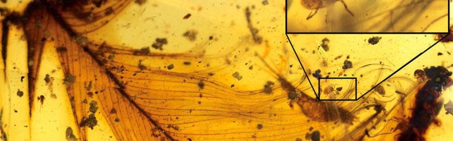 99-million-year-old ticks sucked the blood of dinosaurs