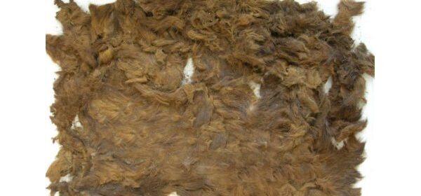 4,000-year-old pelt found in princess grave reveals bears roamed Dartmoor, England