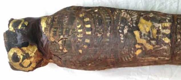 Ancient Egyptian bird mummy turns out to be human