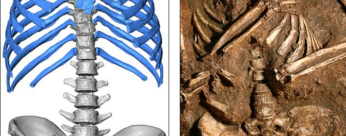Reconstructed Neanderthal chest reveals unusual breathing technique to power muscular bodies in harsh climates