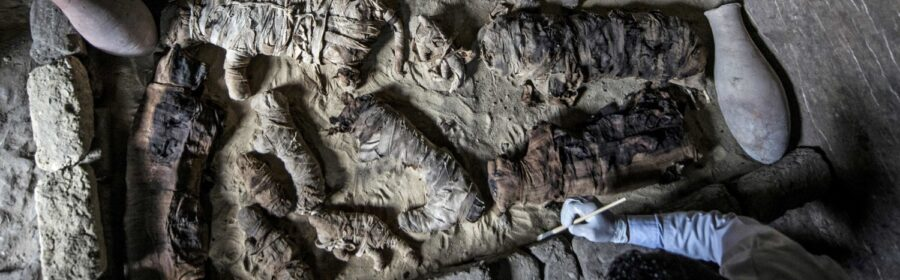 Massive hoard of mummified cats and other animals found in ancient Egyptian tombs